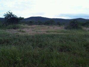 woodland2